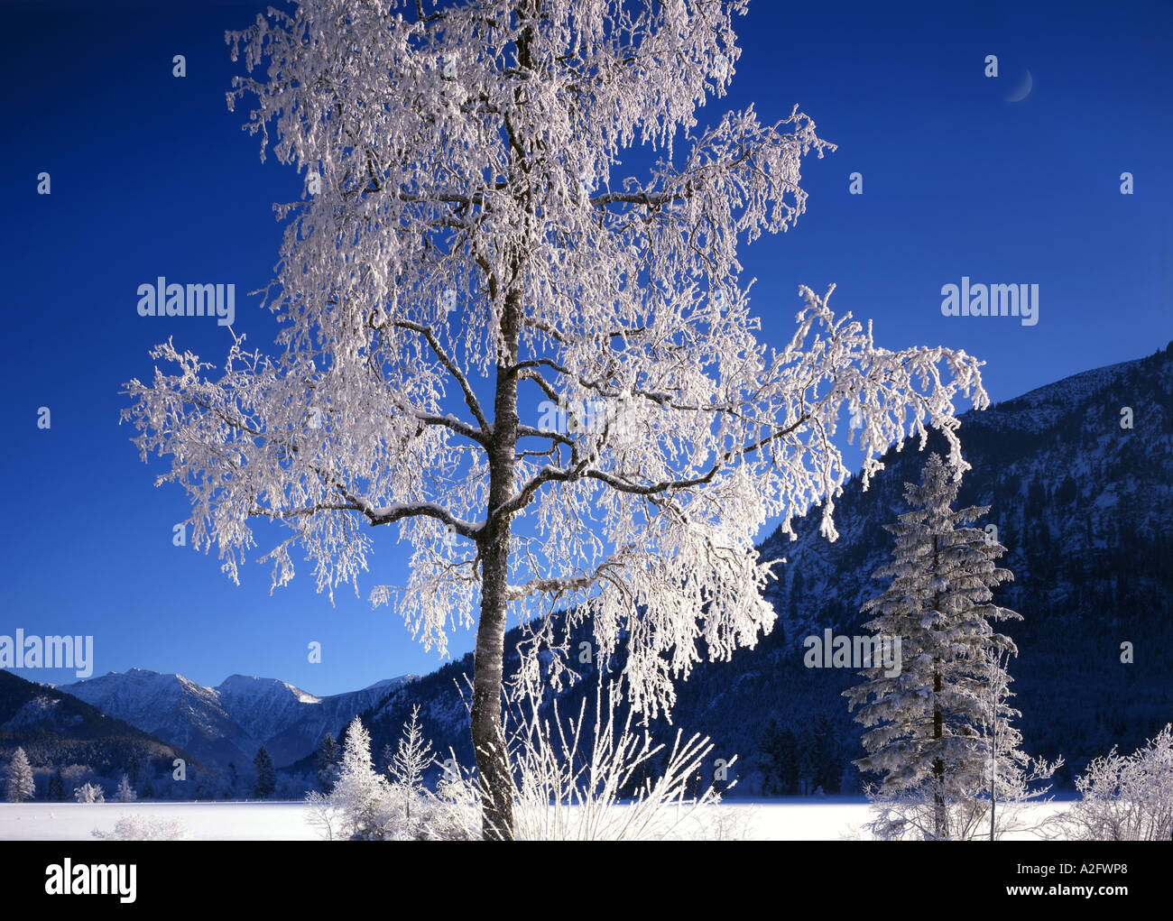 DE - BAVARIA:  Winter Scene near Ettal - Stock Image
