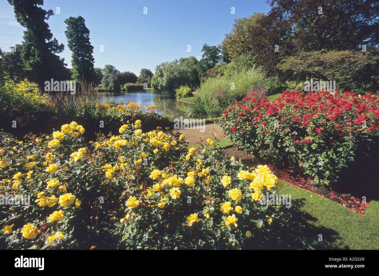Rose Garden, Regents Park, London Stock Photo