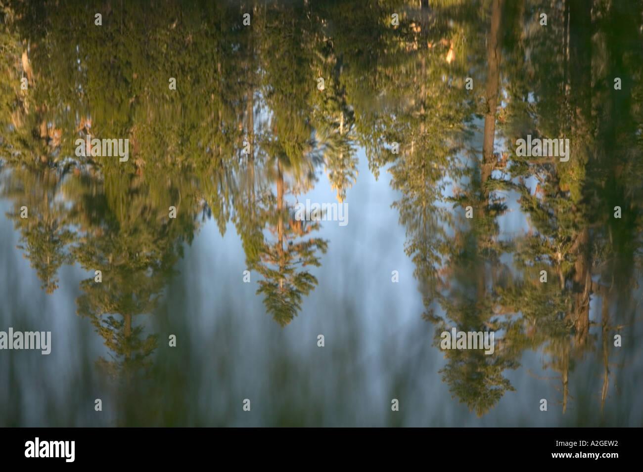 USA, California, Yosemite National Park: Siesta Lake (off Tioga Road) Morning Light, Grasses & Reflections Stock Photo