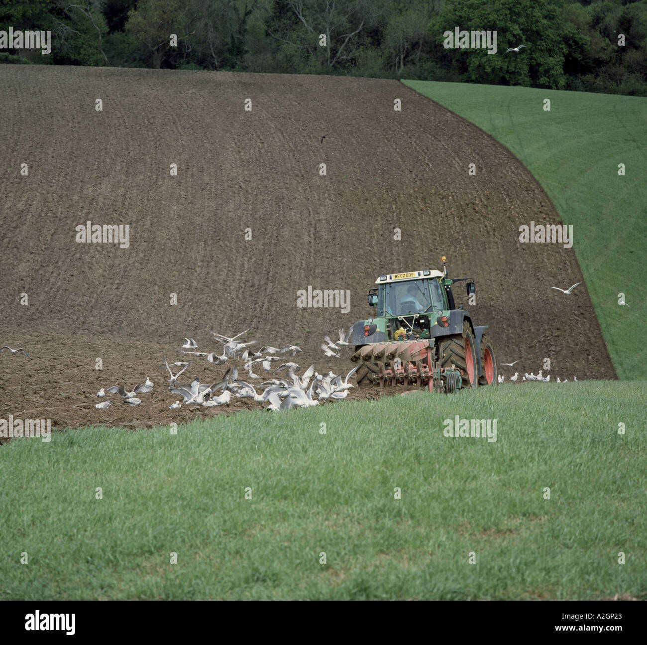 Fendt tractor plough undulating grass pasture field in Devon with some seagulls following - Stock Image