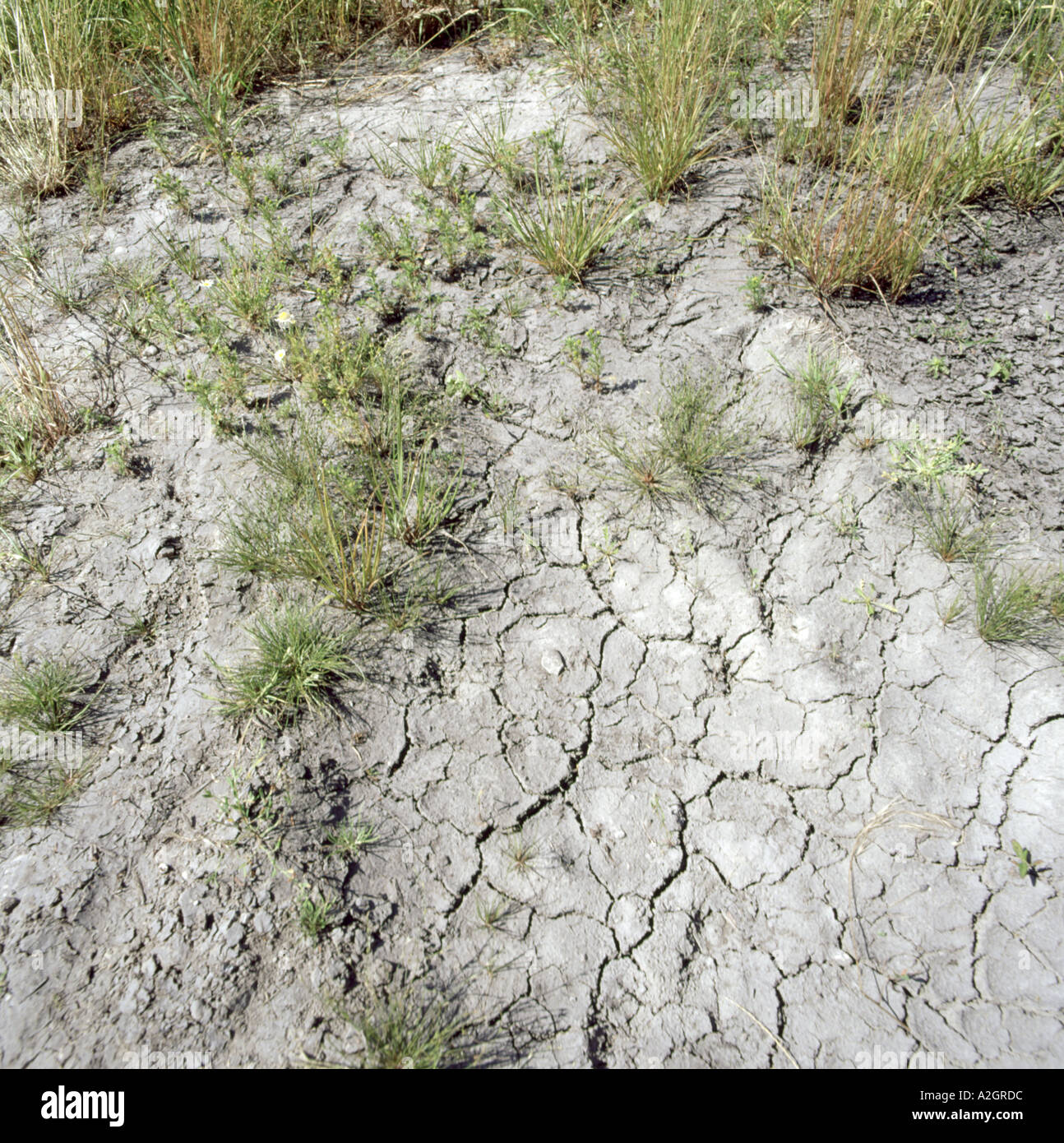 Waterlogged soil dried out and cracked by high summer temperatures during a drought period - Stock Image
