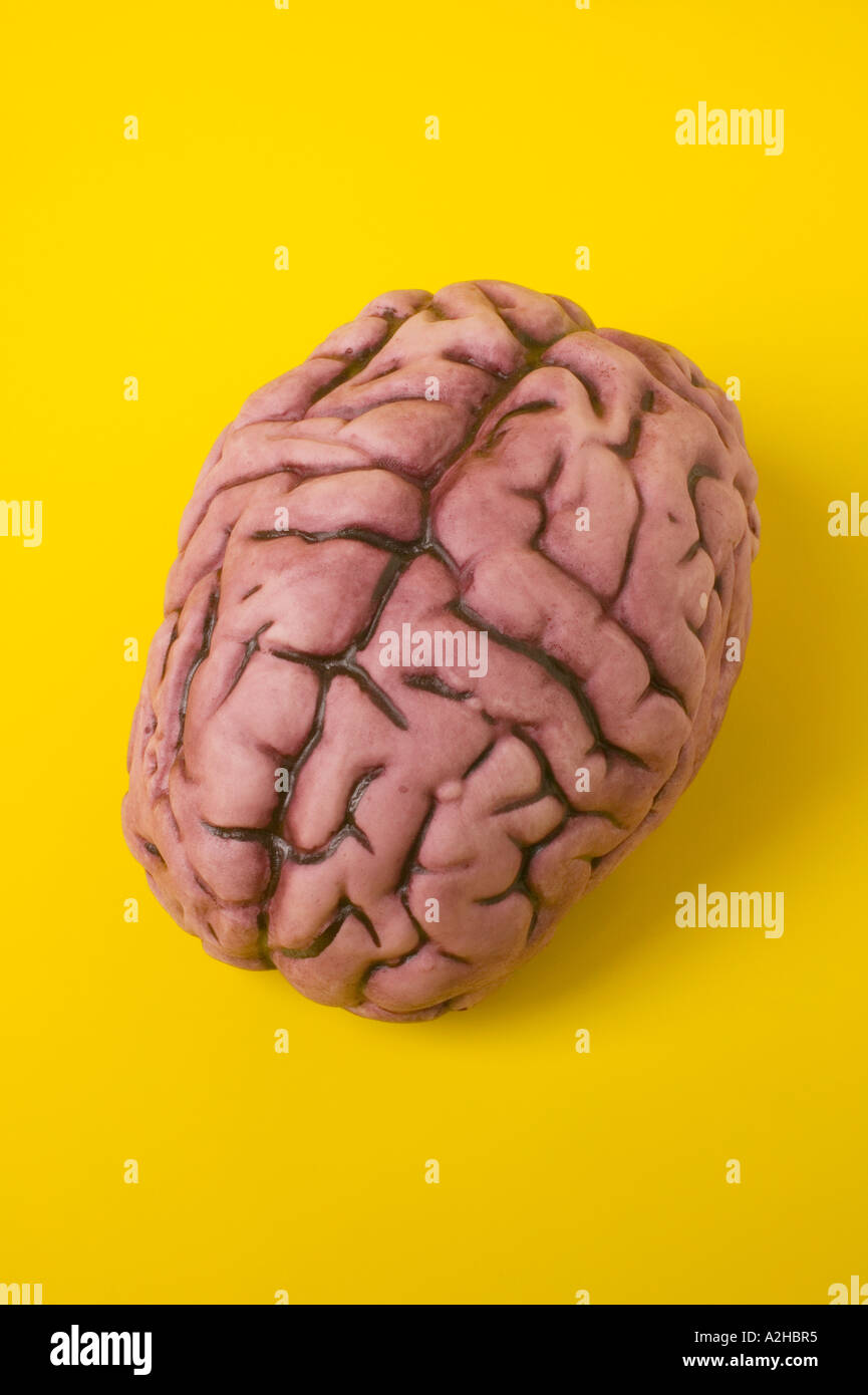 Human brain model on yellow background Stock Photo: 6014388 - Alamy