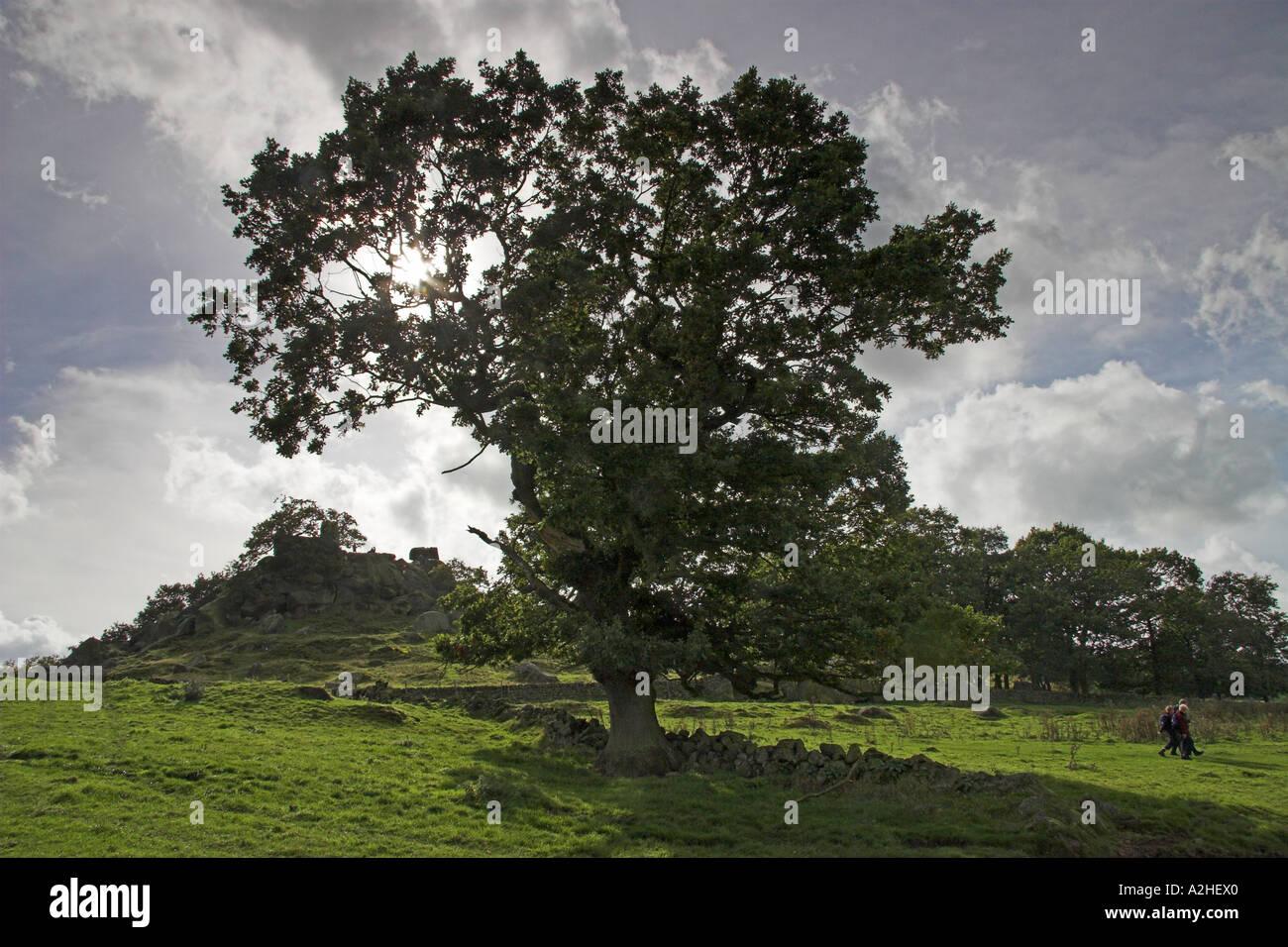 Robin Hood's Stride, Harthill Moor, Peak District National Park, Derbyshire, England - Stock Image