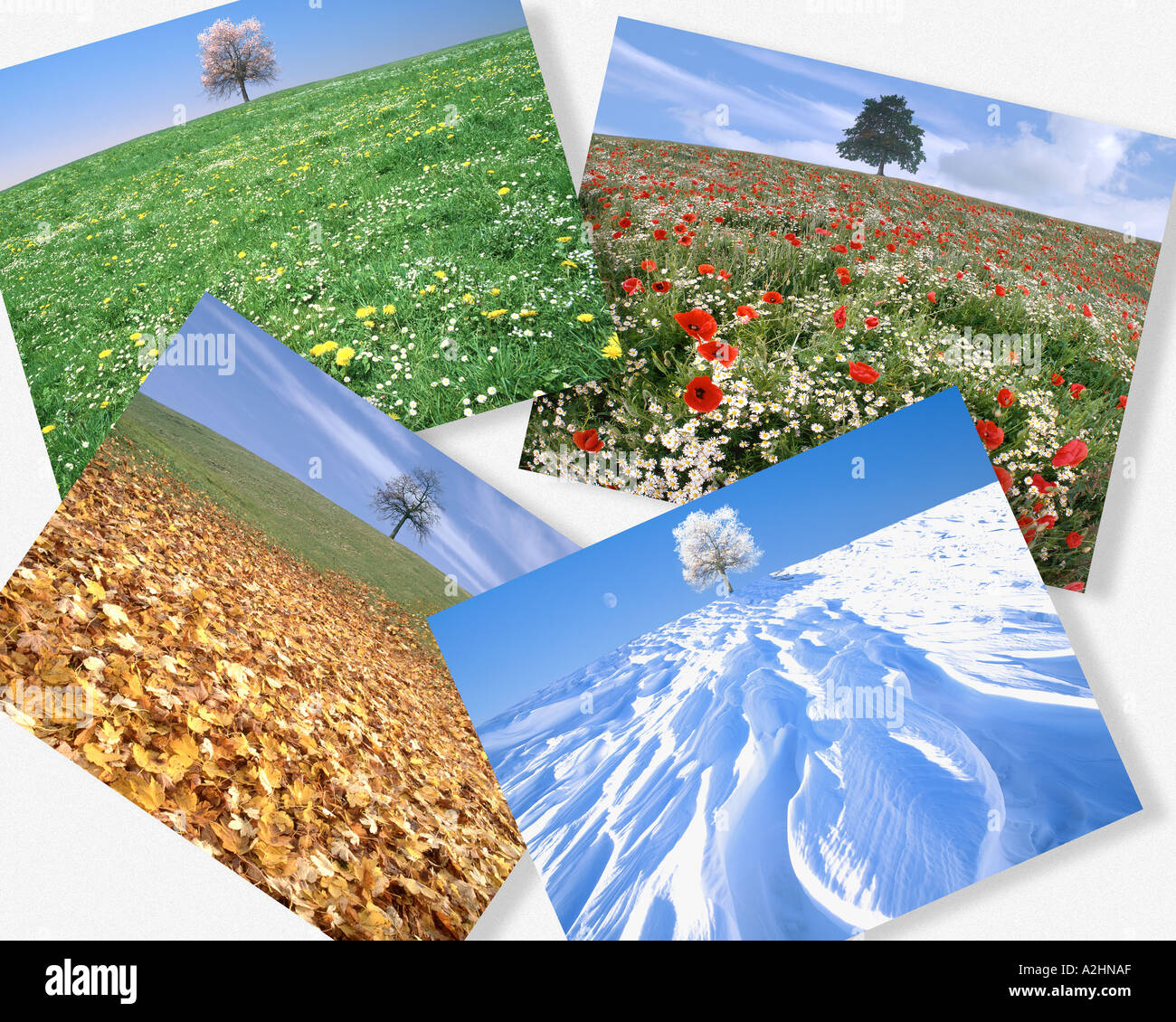 CONCEPT: The Four Seasons - Stock Image