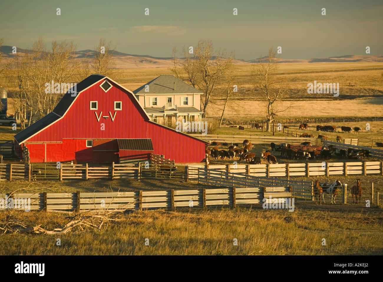 Canada Alberta Pincher Creek Red Barn Ranch Morning Stock
