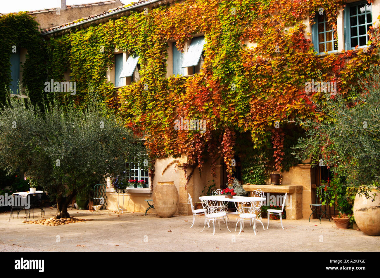 The main building covered with vine with olive trees, garden Stock ...