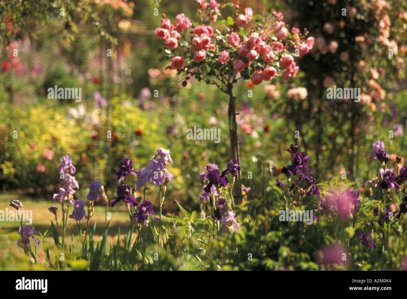 EU, France, Normandy, Eure, Giverny. Claude Monet\'s Gardens, Spring ...