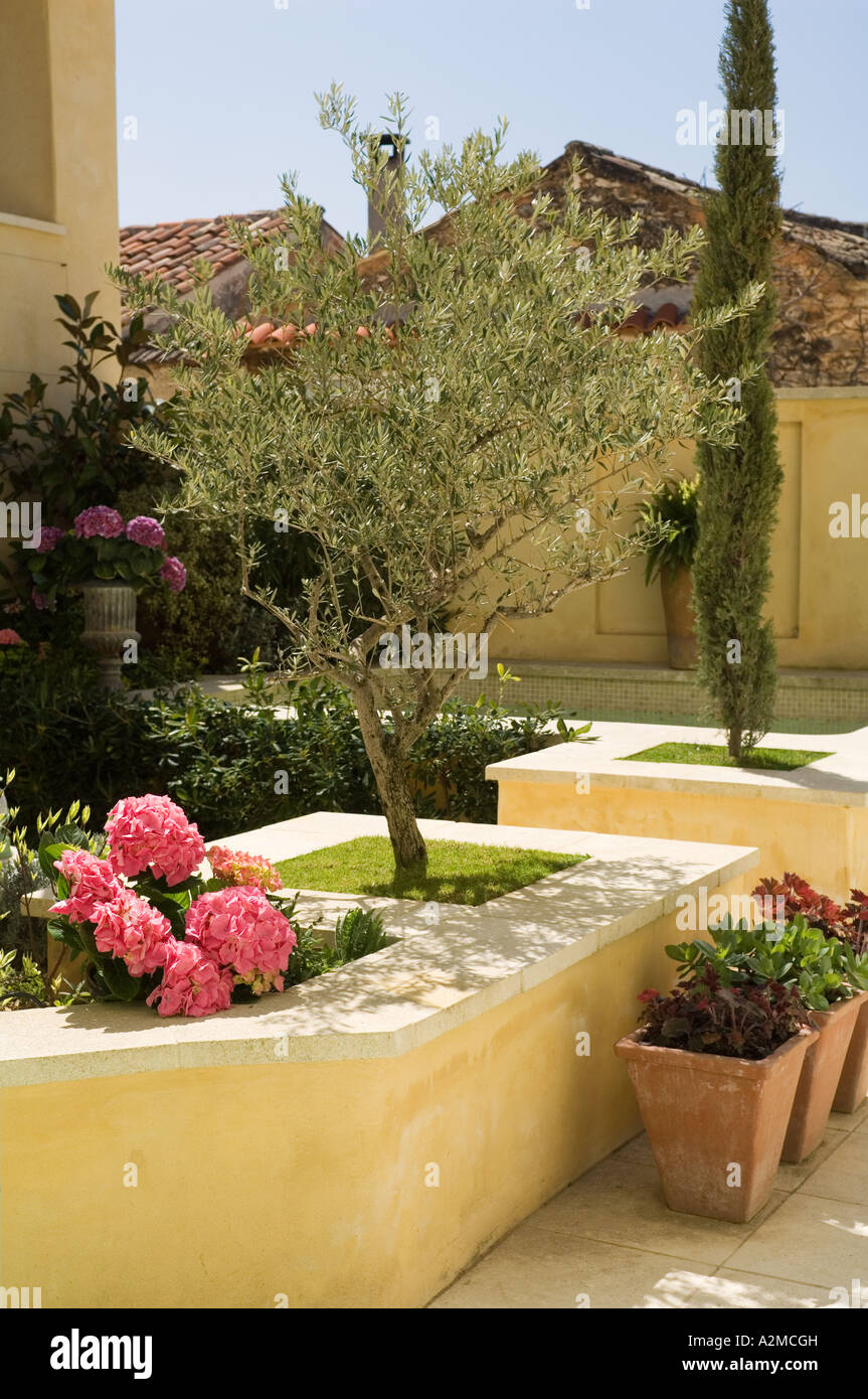 Provence Garden Courtyard With Potted Plants And Olive Tree   Stock Image