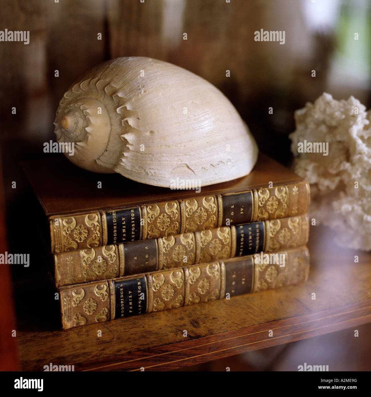 Seashell on book pile in glass-fronted bookcase - Stock Image