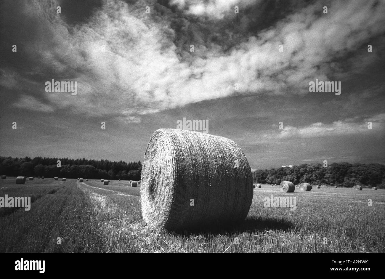 Bringing in the harvest. Hay bales drying under balmy skies - Stock Image