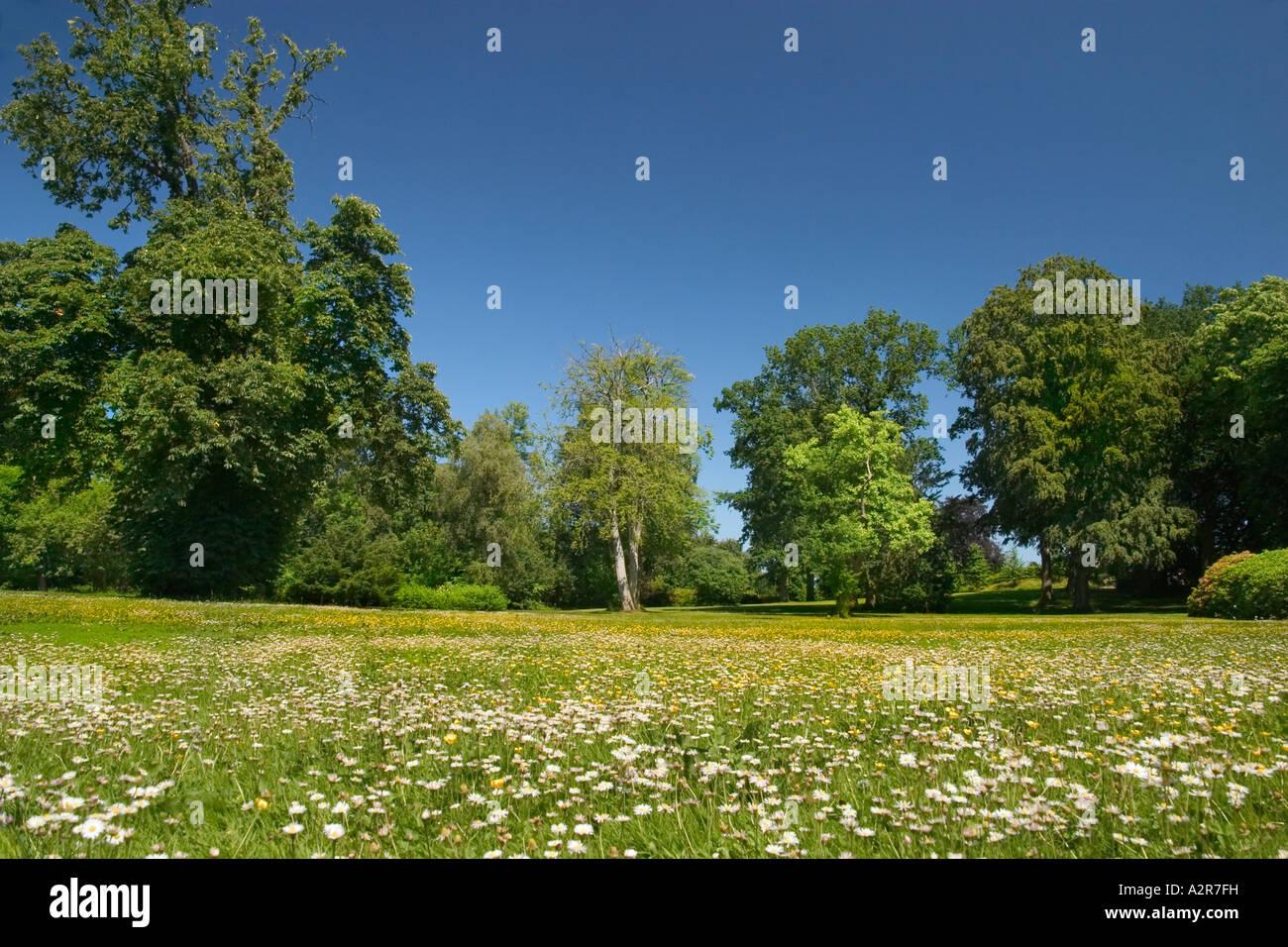 Meadow with flowers Vedbygård Zealand Denmark - Stock Image
