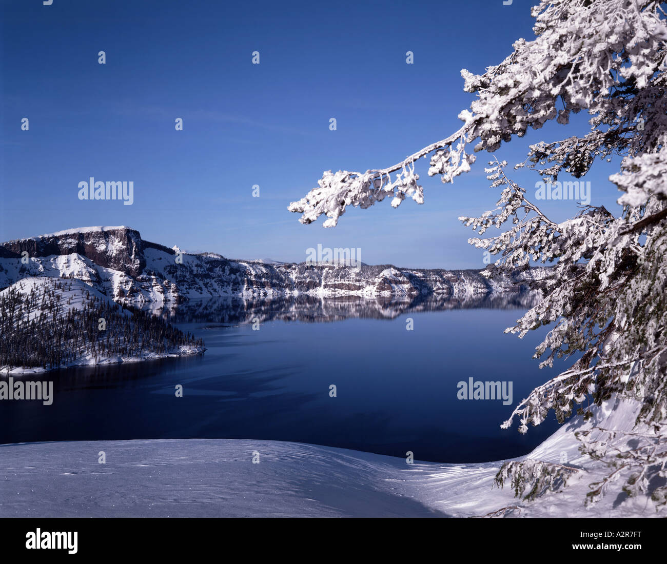 Ice tree branch frames a Winter view of Crater Lake National Park in ...