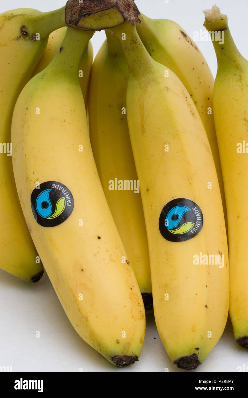 bunch of fairtrade waitrose bananas with ft logos from dominican