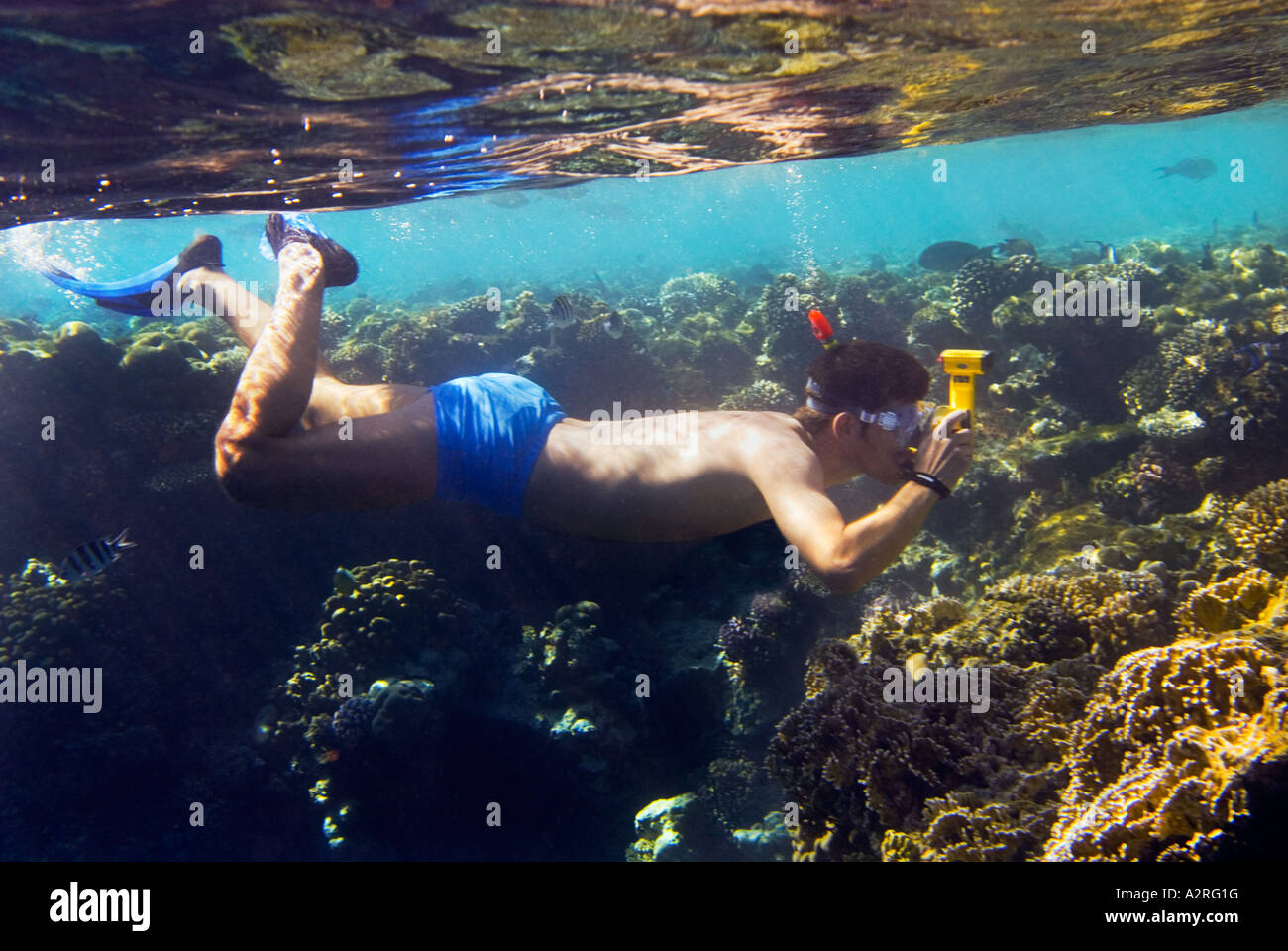Photographer Snorkeling Diving Goggles Yellow Underwater Under Water Camera Reef Riff At Sharm El Sheikh EGYPT HADABA Snorkler