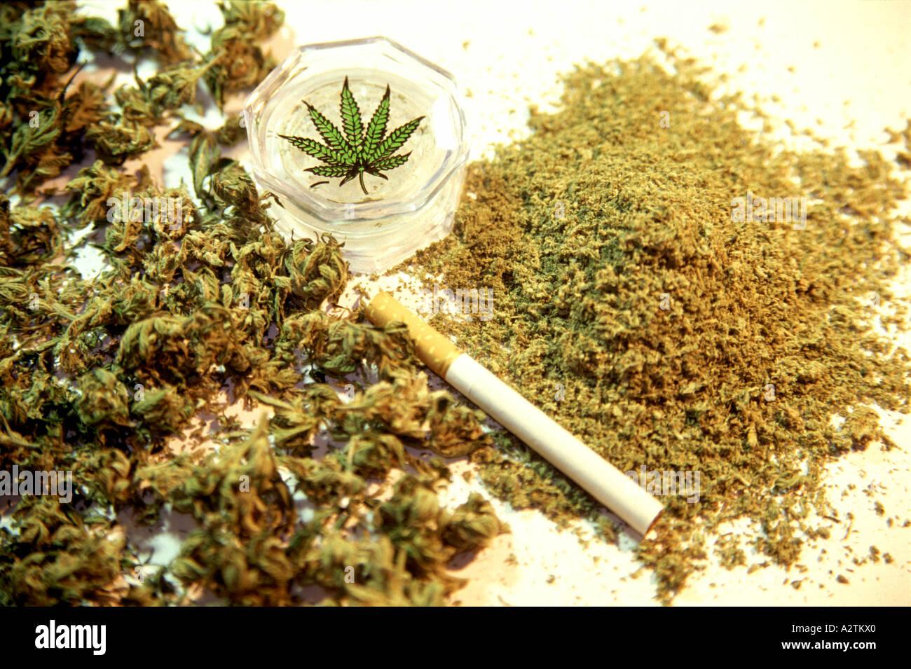 План конопля марихуана значение конопли когда куришь