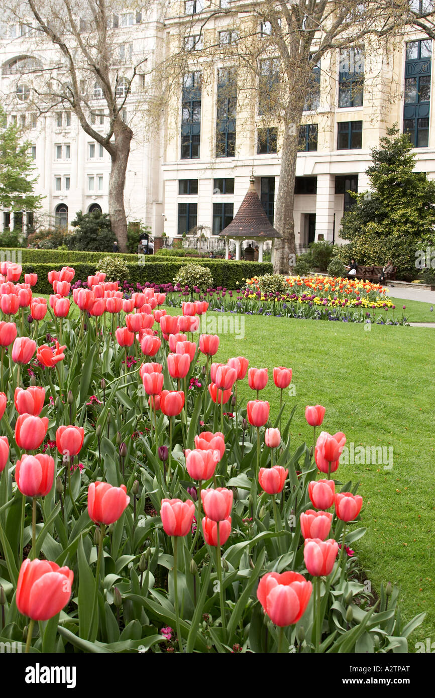 Colourful spring tulip flowers in Finsbury Circus City of London EC2 England UK - Stock Image