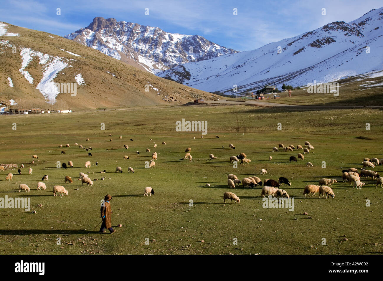 Farming A Shepard and his sheep in the High atlas region of Oukaimeden Altitude is above 3000 meters Morocco - Stock Image