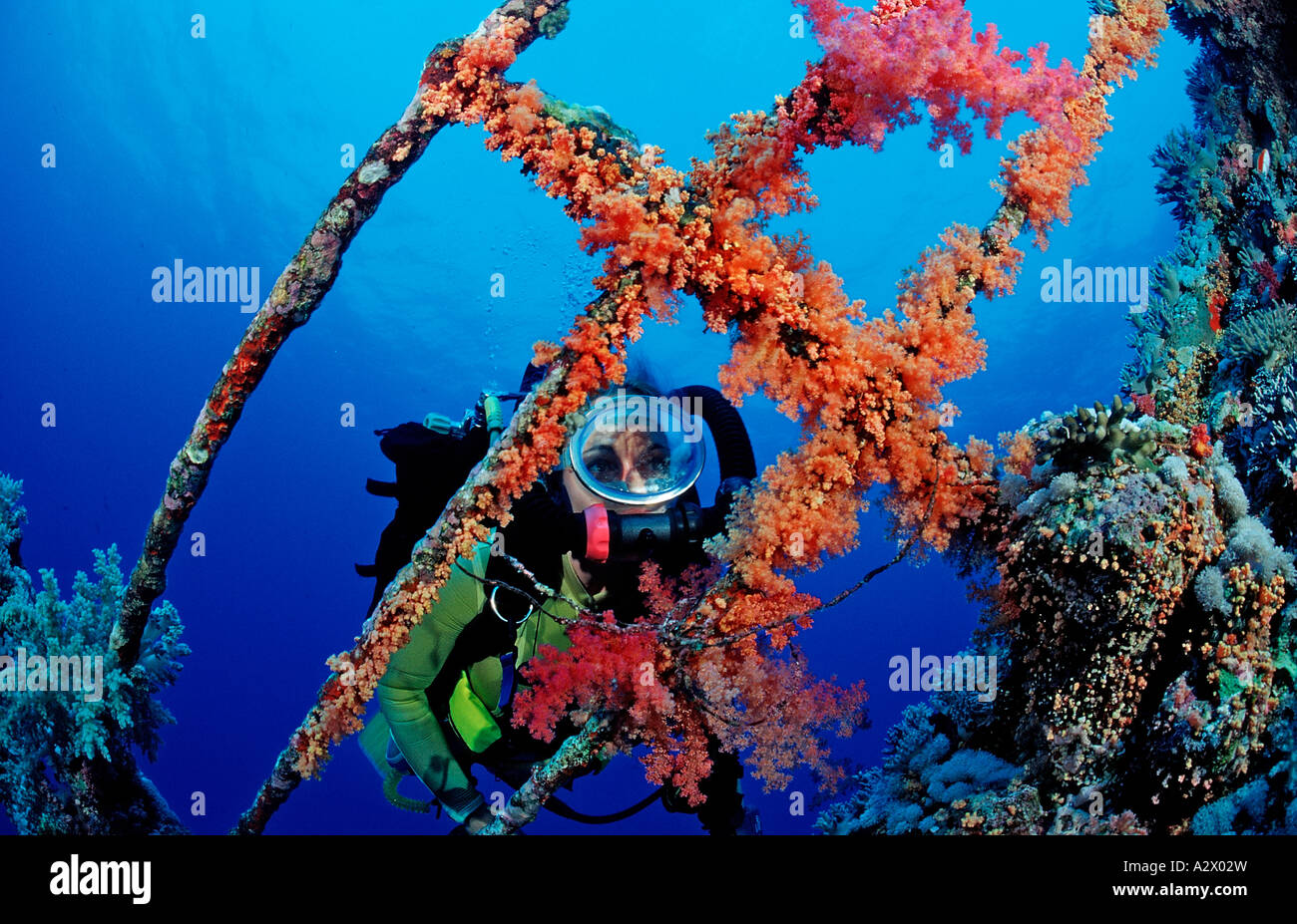 Scuba diver exploring the shipwreck Aida Egypt Africa Red Sea - Stock Image