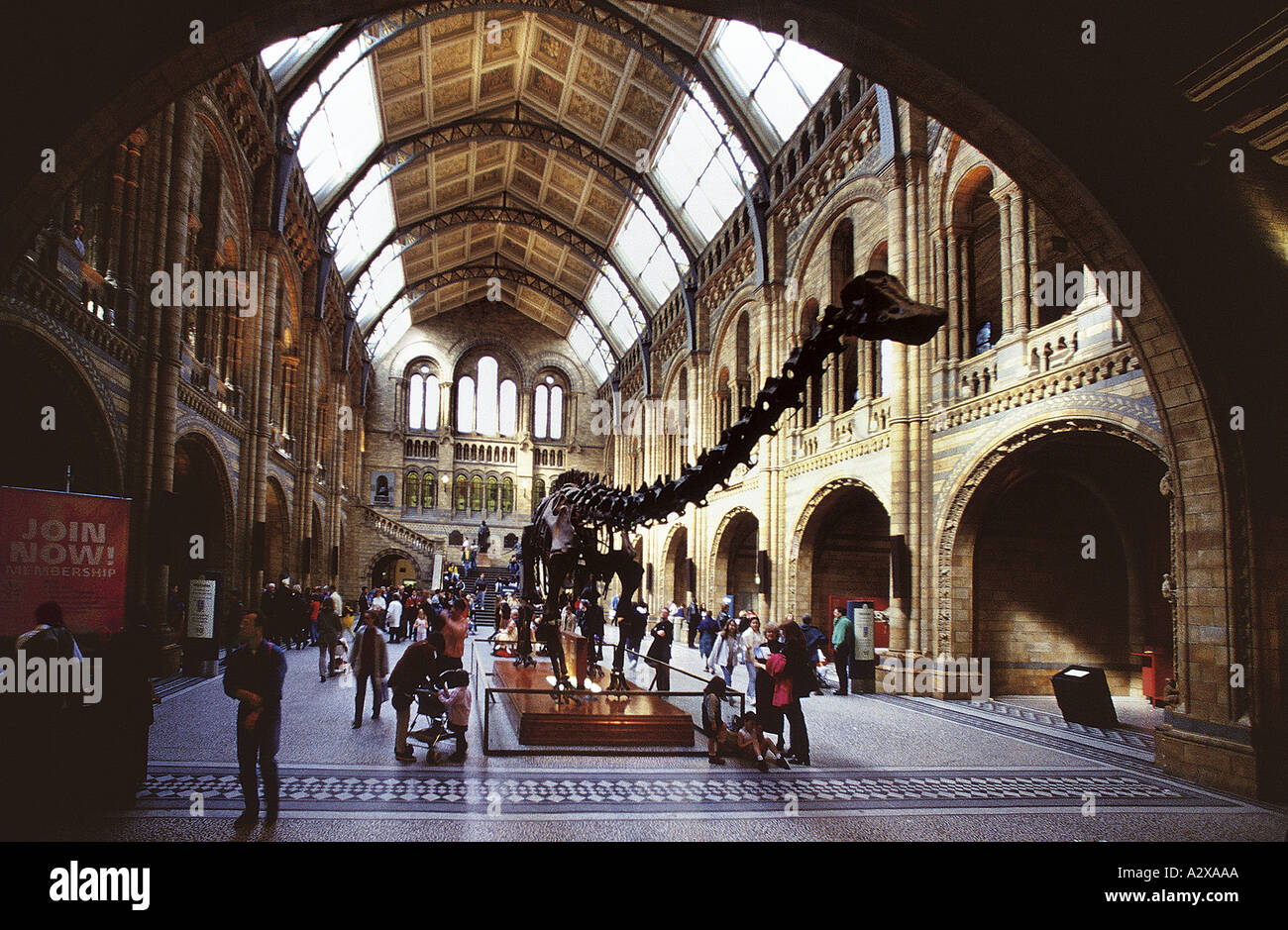 The Central Hall Natural History Museum London - Stock Image
