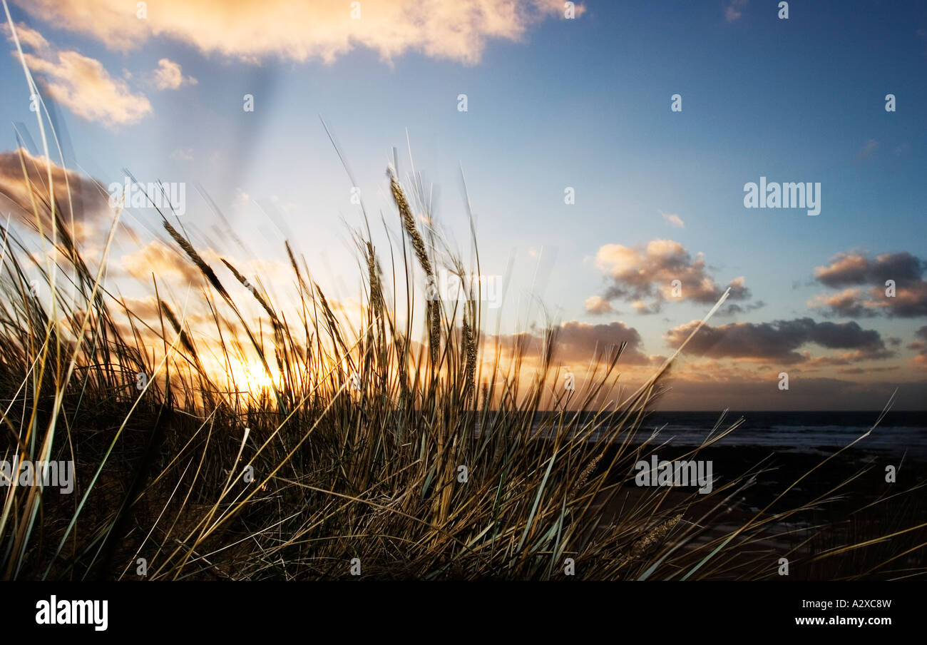 Coastal sunset with wind blowing through grass Stock Photo