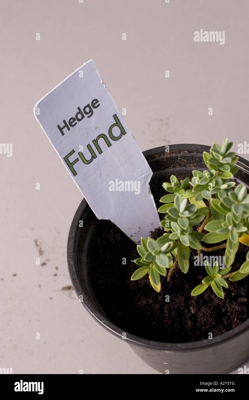 Hedge funds plant pot with label and hedge - Stock Image