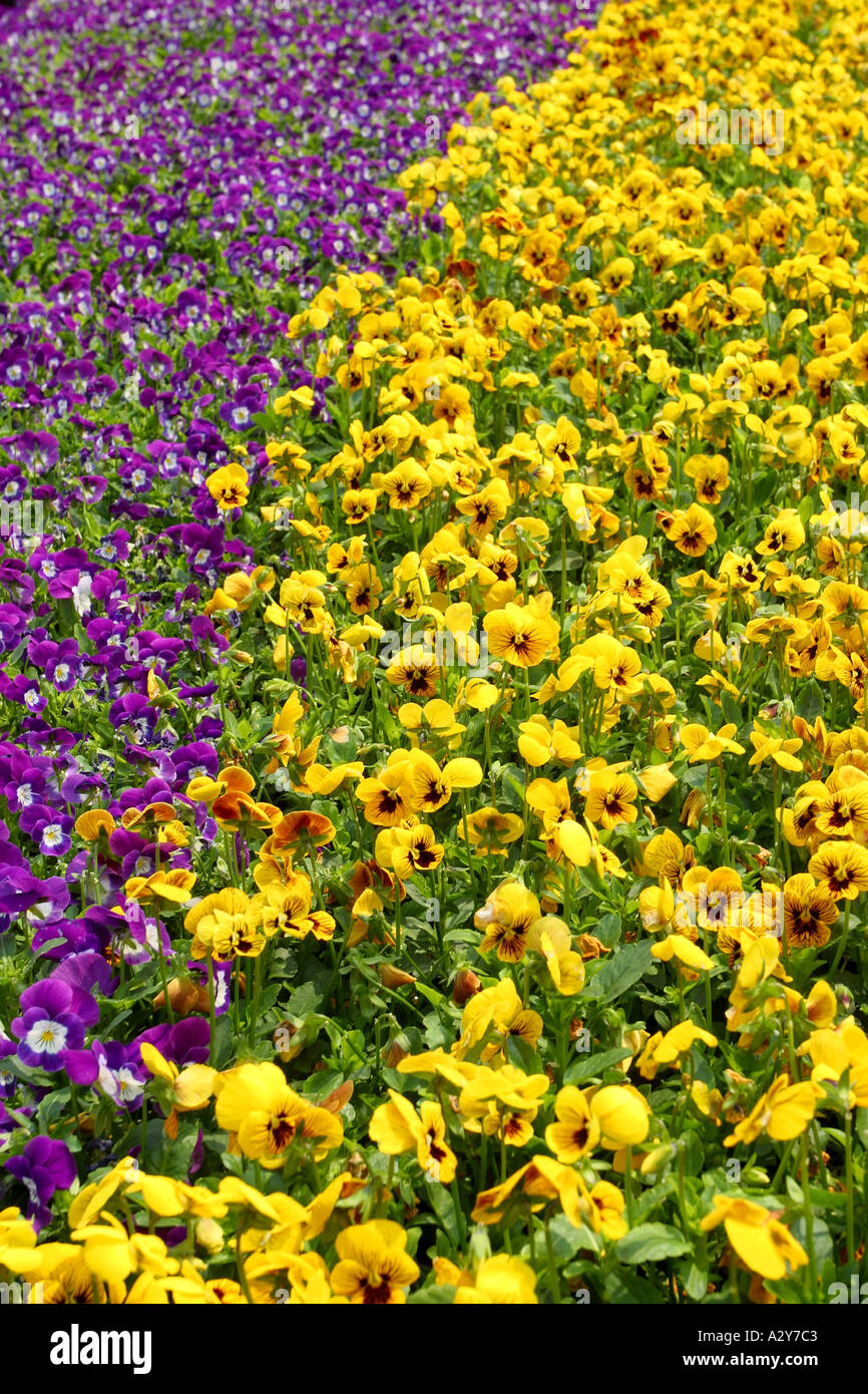 Flowers shrubs chrysanthemum yellow landscape flower plant peaceful flowers shrubs chrysanthemum yellow landscape flower plant peaceful placid serene tranquil beautiful lease of life white shrubs mightylinksfo