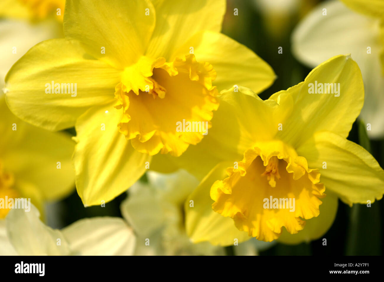 Flowers Shrubs Orchid Yellow Landscape Stock Photos Flowers Shrubs