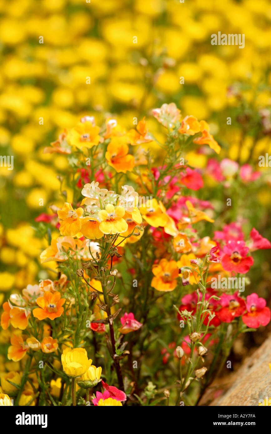 Flowers Shrubs Orchid Yellow Landscape Flower Plant Peaceful Placid