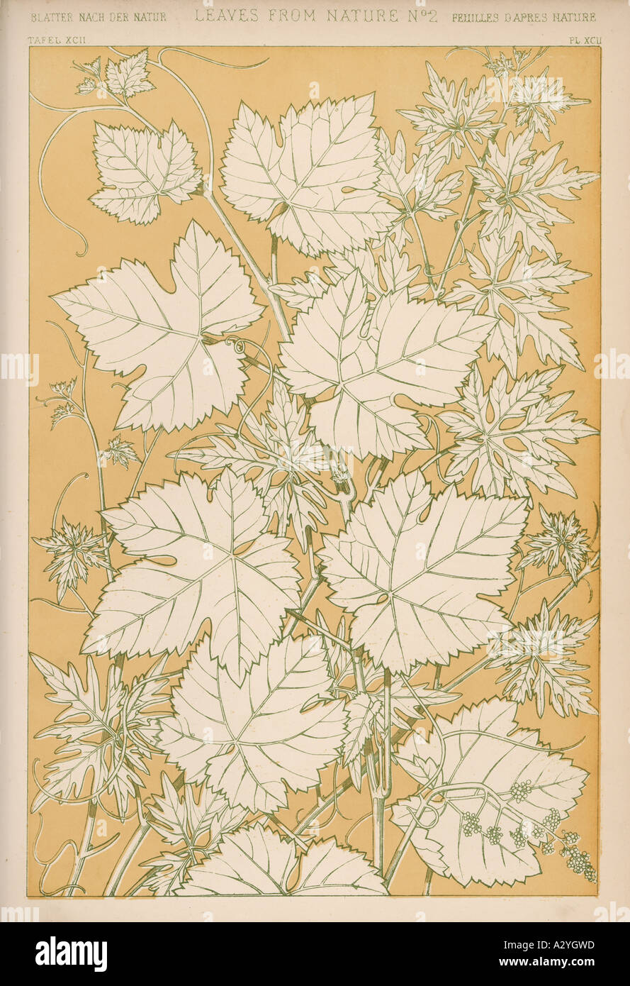 Owen Jones Flowers 92 - Stock Image