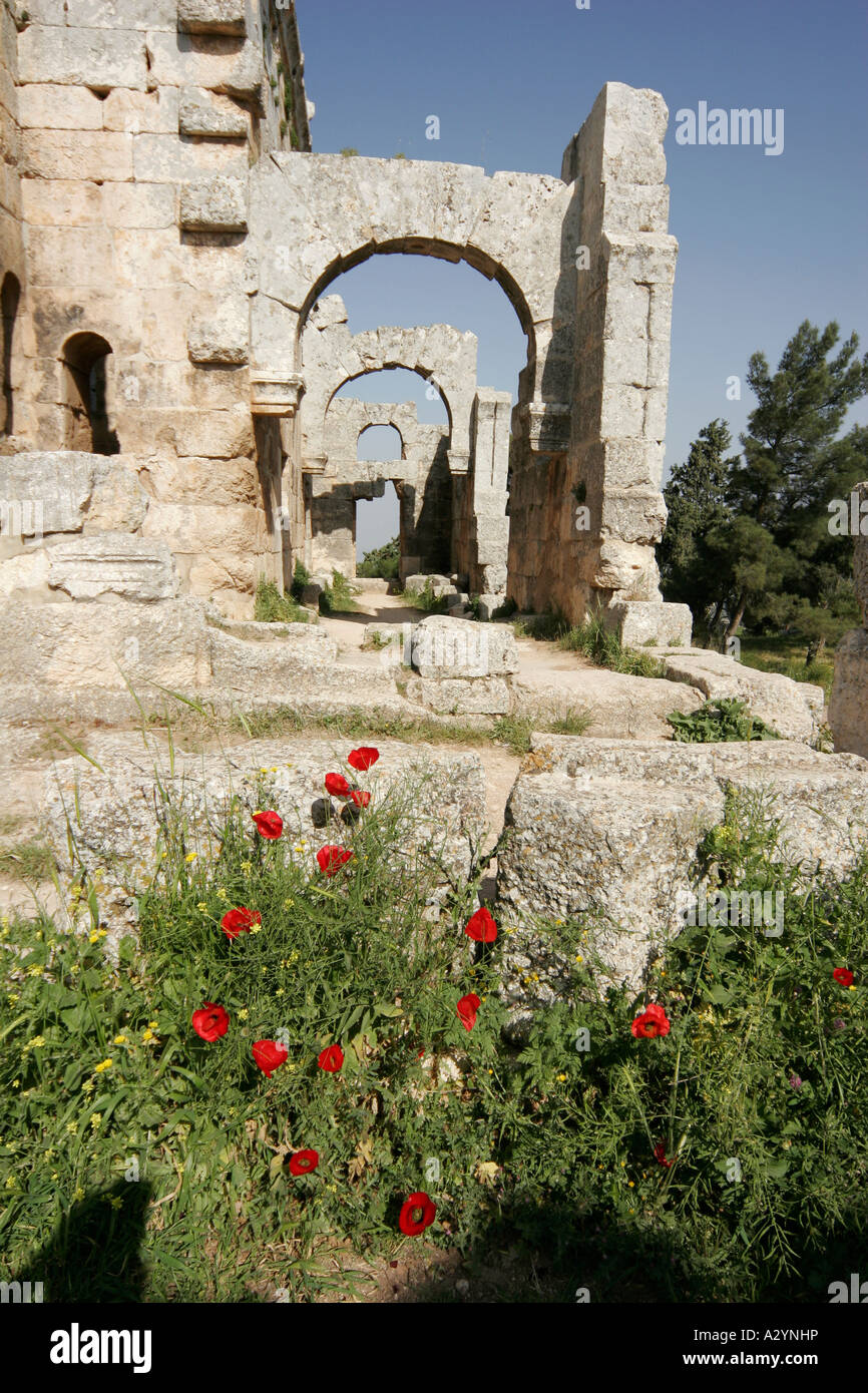 Poppy flowers, Basilica of St Simeon, Qalaat Samaan, Syria, Middle East - Stock Image