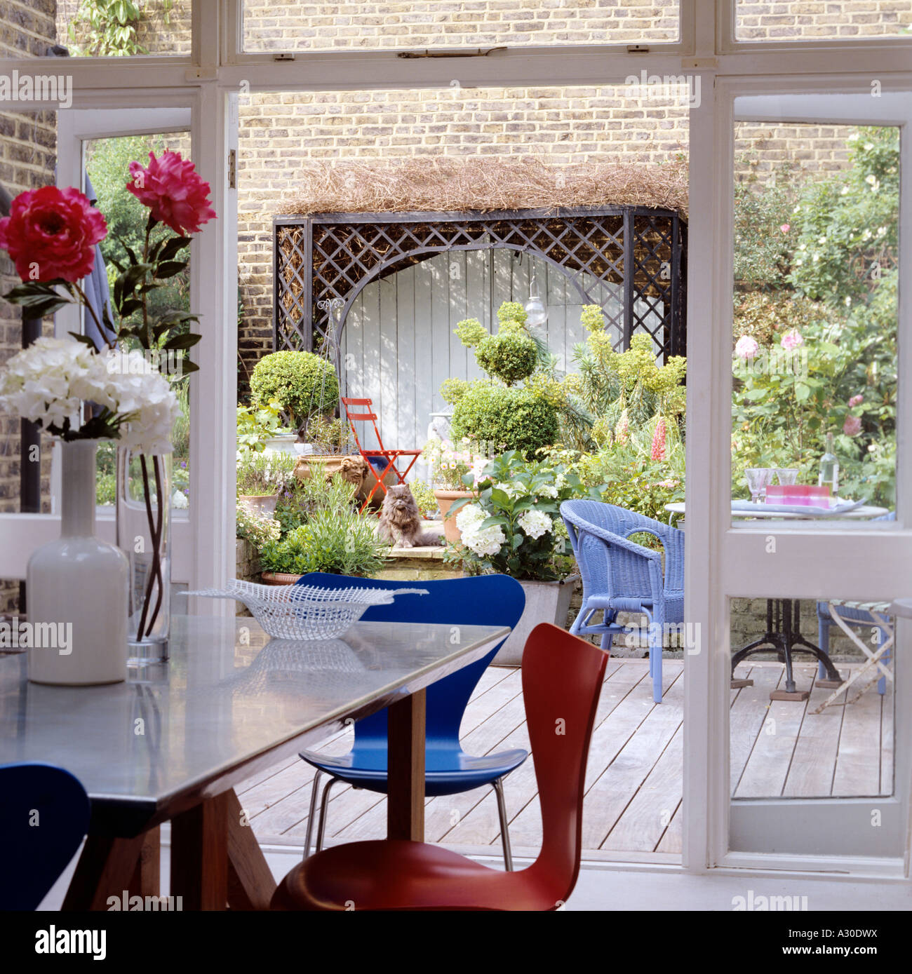 View through open French windows to walled patio with wooden decking, pot plants and boxwood topiary - Stock Image