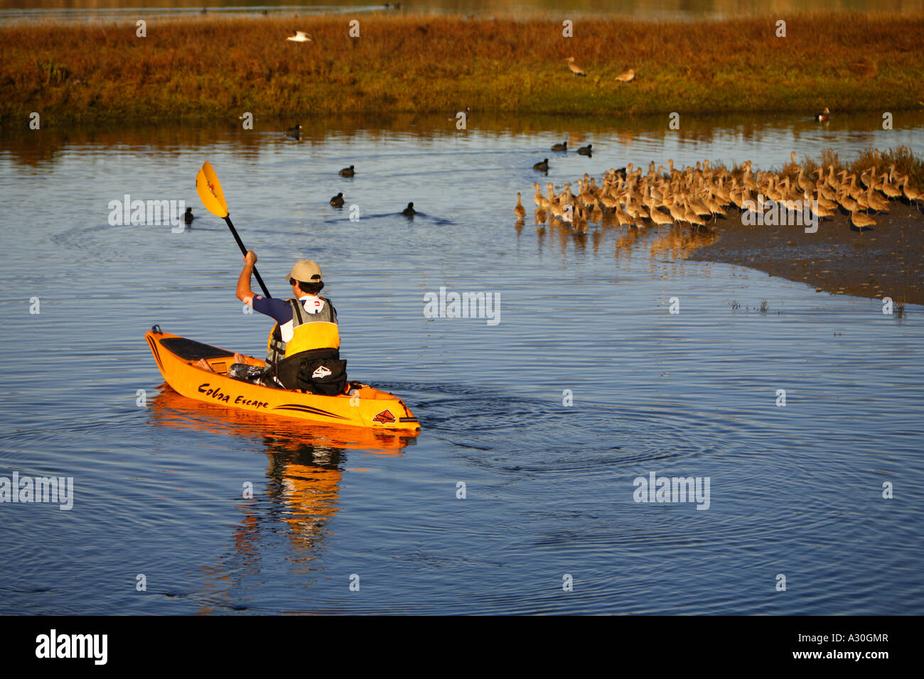Kayak Rentals Back Bay Newport Beach Ca