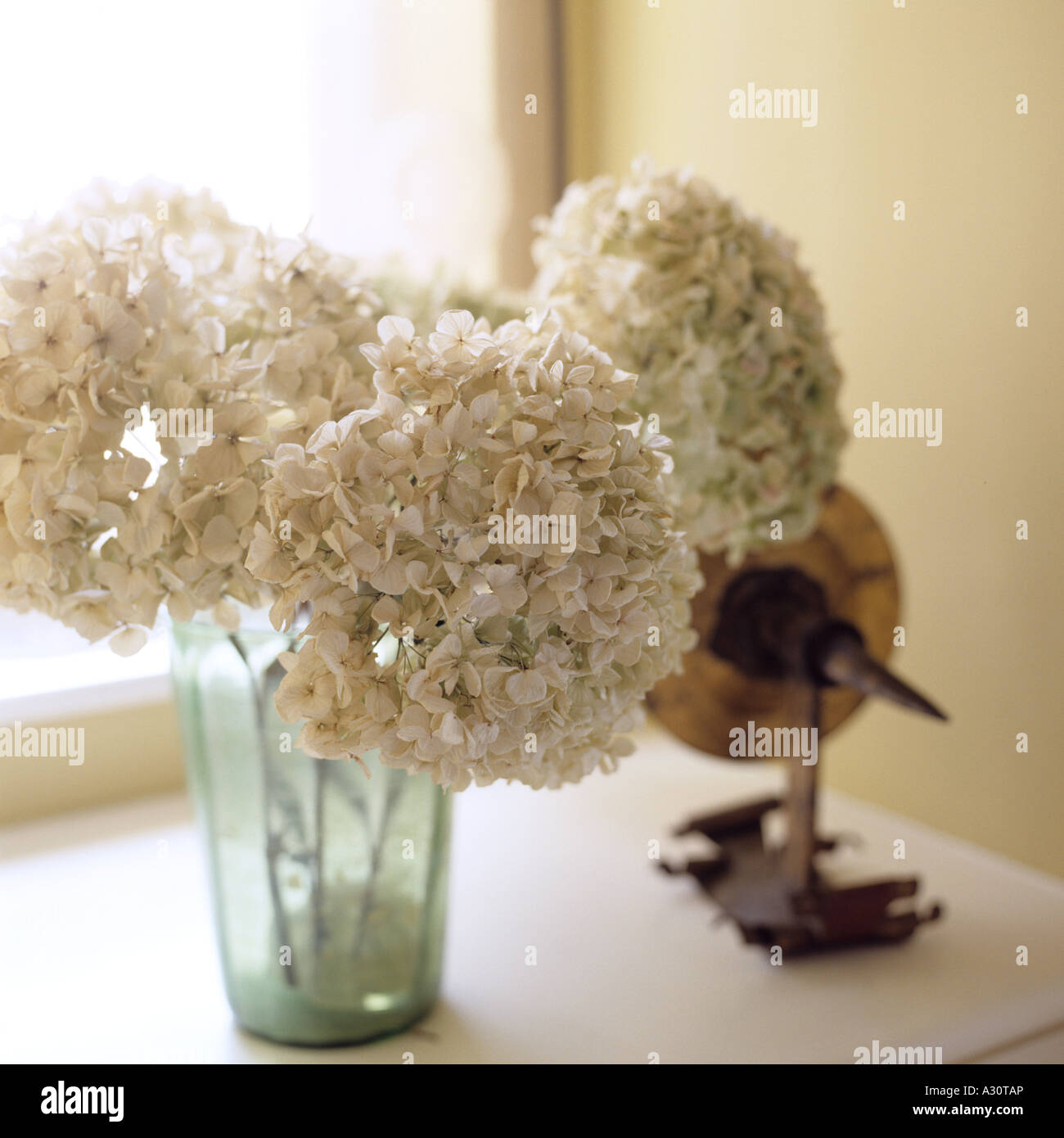 A Still Life Of Dried White Hydrangea Flowers In A Glass On A Stock