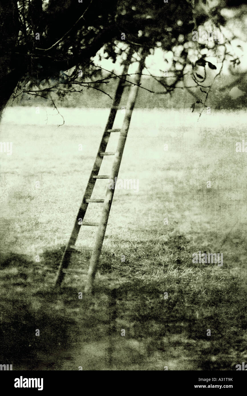 a wooden ladder in an orchard - Stock Image