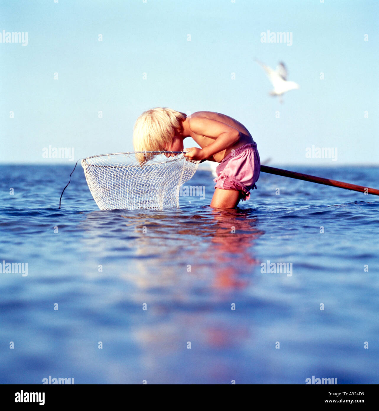 Young boy standing in shallow ocean water hunched over and looking into a fishing net - Stock Image