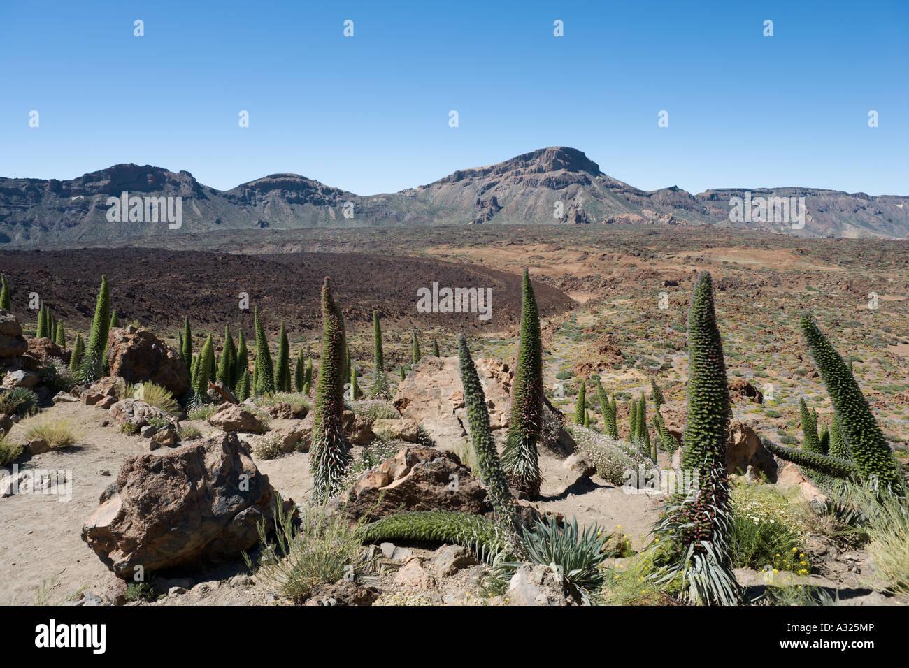 View over el Tabonal Negro, Las Canadas del Teide, Tenerife, Canary Islands, Spain - Stock Image