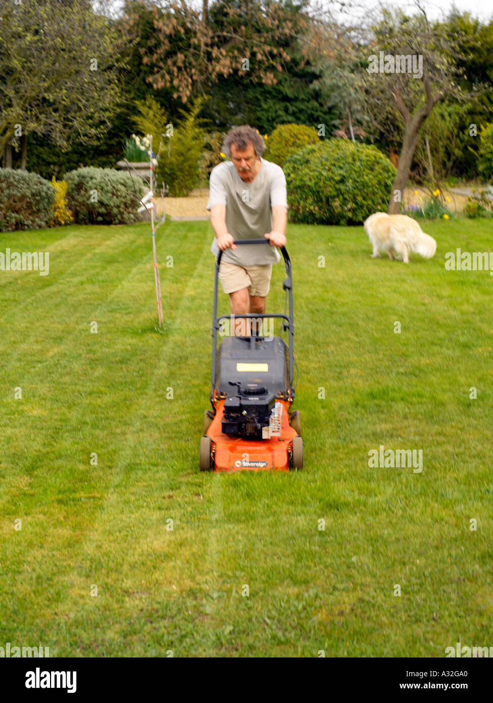 Man Mowing Lawn with Petrol Lawn Mower Lawn Stripes - Stock Image