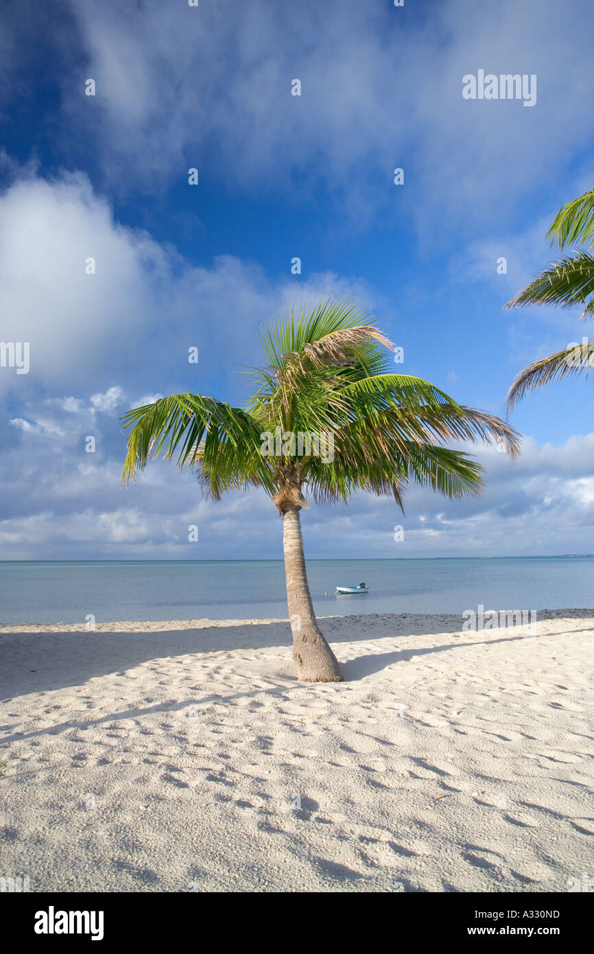 Palm tree on tropical beach on the island of Abaco in the Bahamas - Stock Image