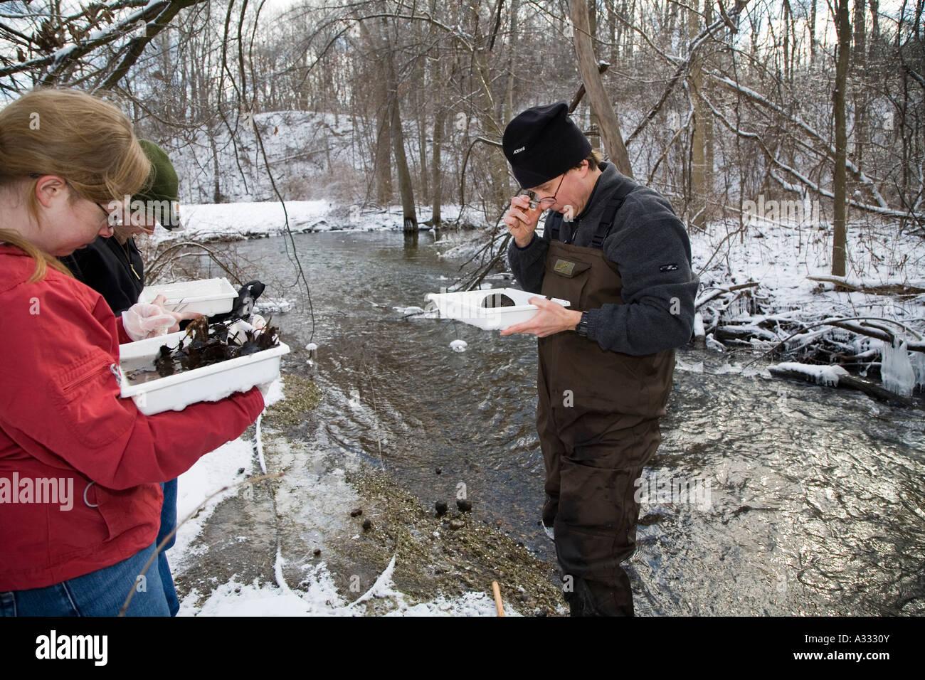 Volunteers Search for Stoneflies - Stock Image