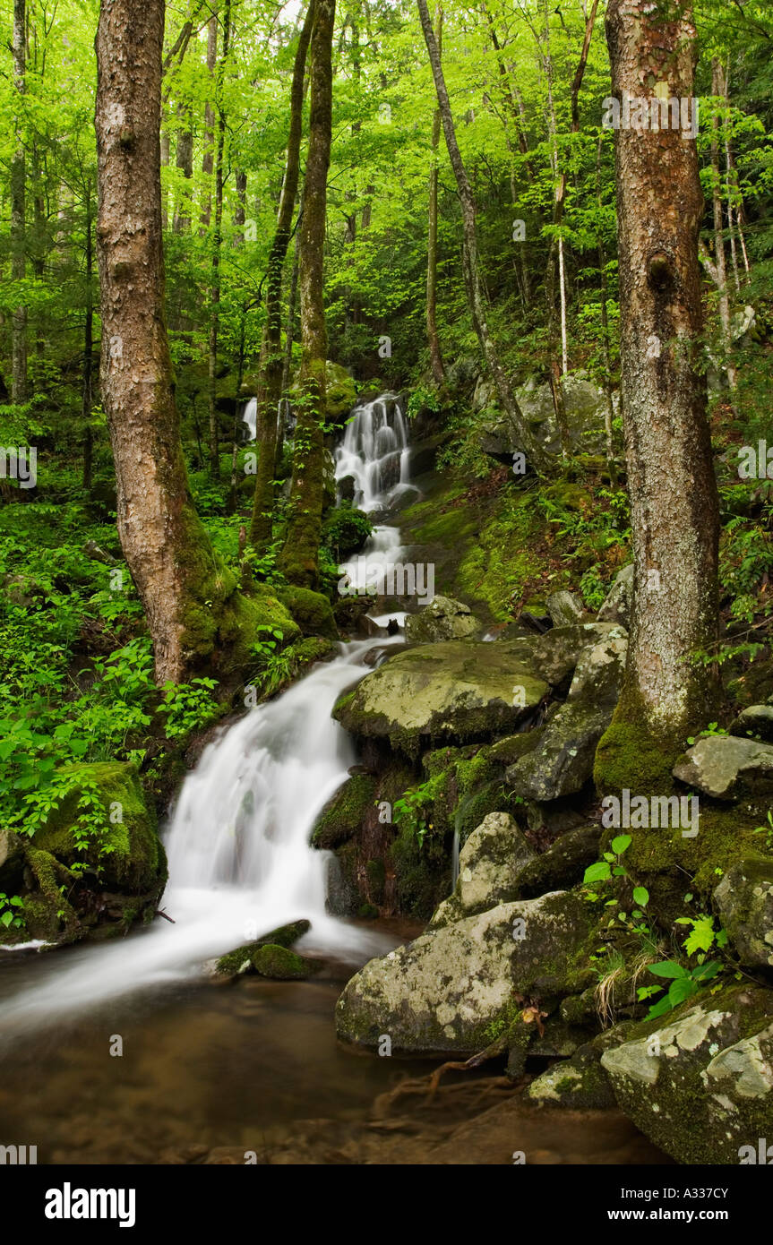 Forest Cascade Running Down Mountainside Tremont Area Great Smoky Mountains National Park Tennessee - Stock Image