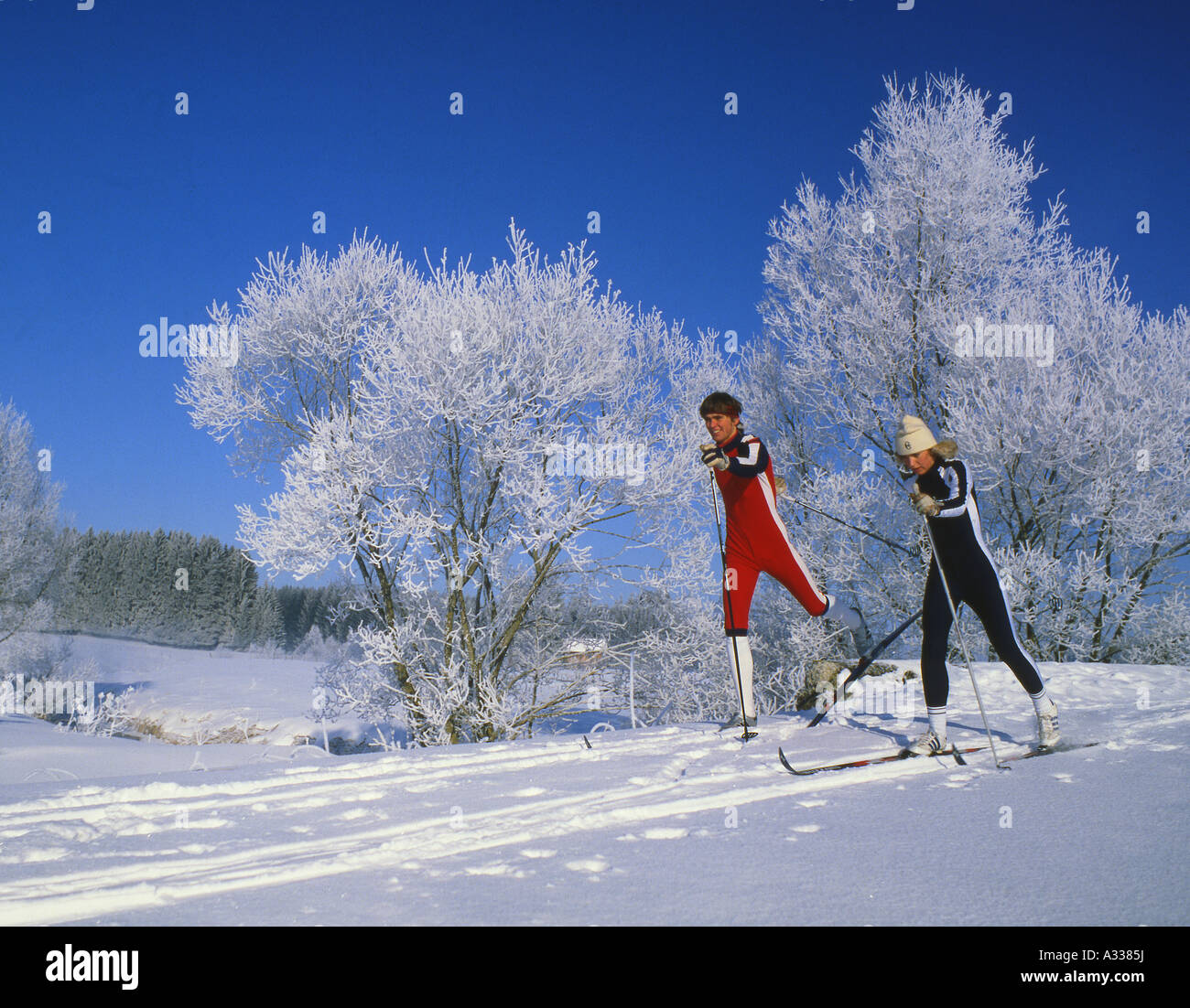 Cross country skier in front of hoarfrost trees - Stock Image