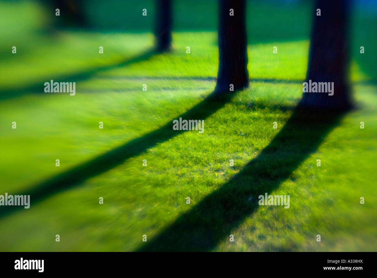 Soft Focus Lens Turns Shadows Cast By Late Afternoon Sun Into Stock