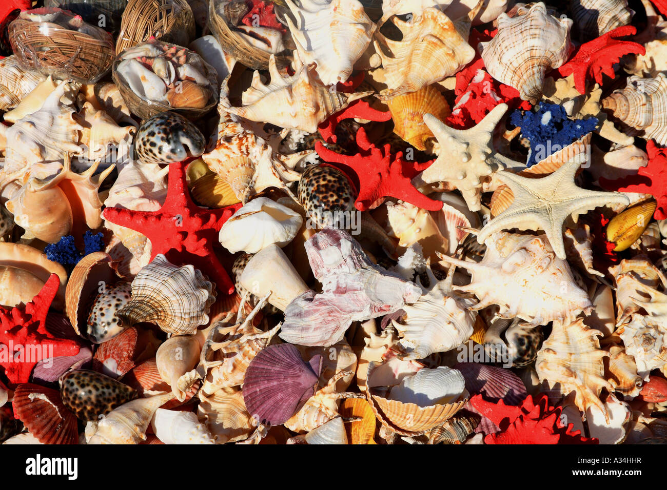 selling of sea animals Stock Photo