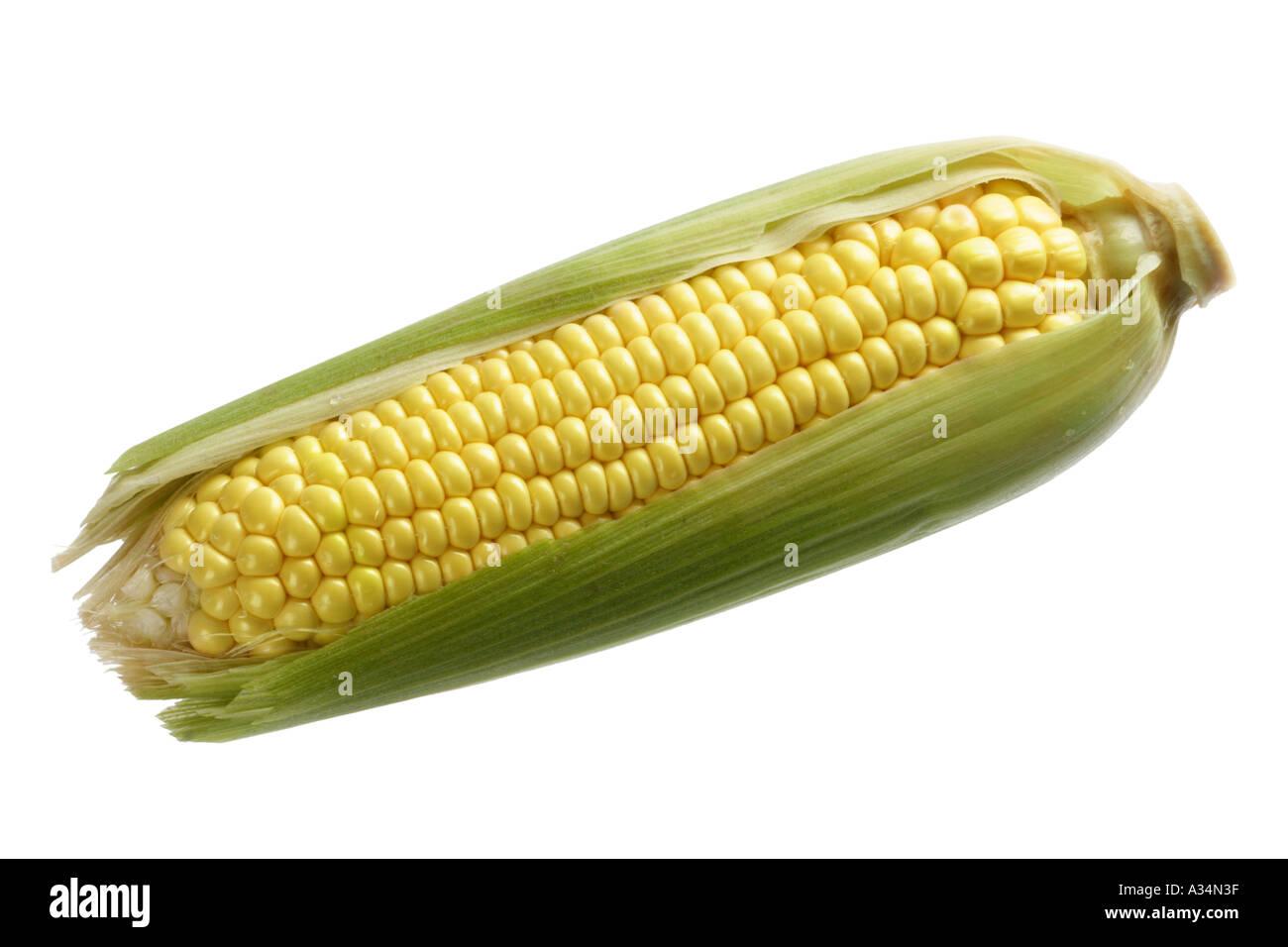 Fresh Corn on the Cob - Stock Image