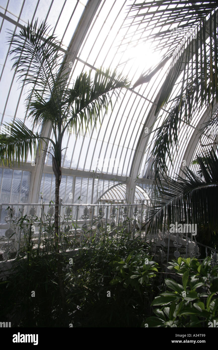 The Royal Botanic Gardens Kew in side the Palm House - Stock Image