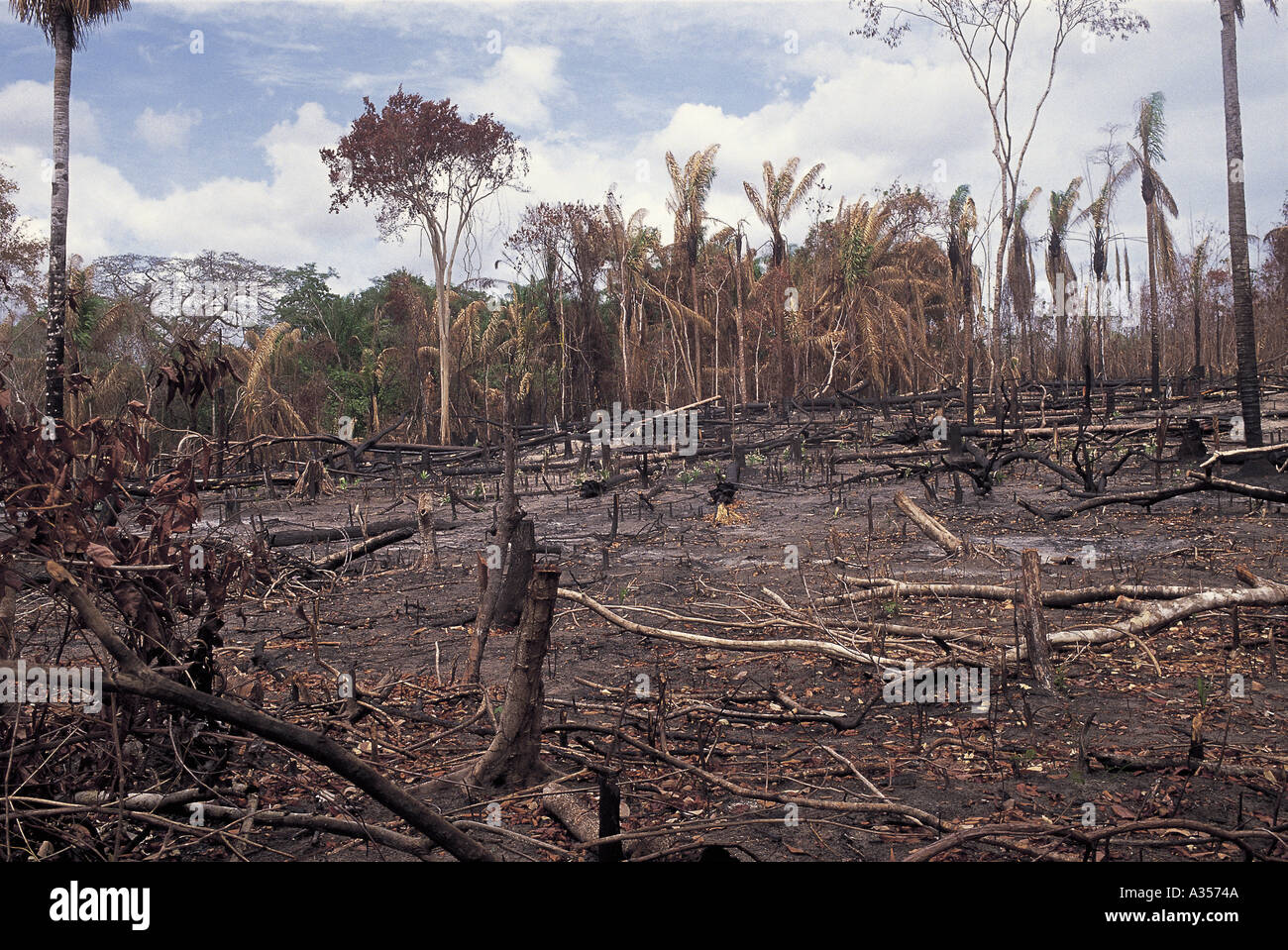 Slash And Burn Brazil Stock Photos Amp Slash And Burn Brazil