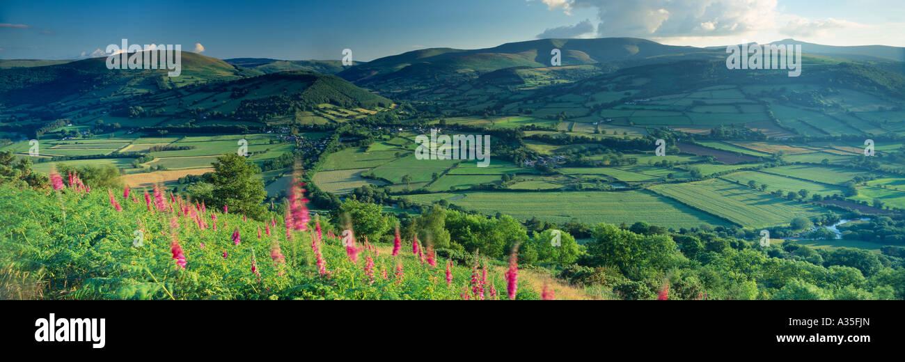 foxgloves and farmland near Talybont on Usk Brecon Beacons Wales UK - Stock Image