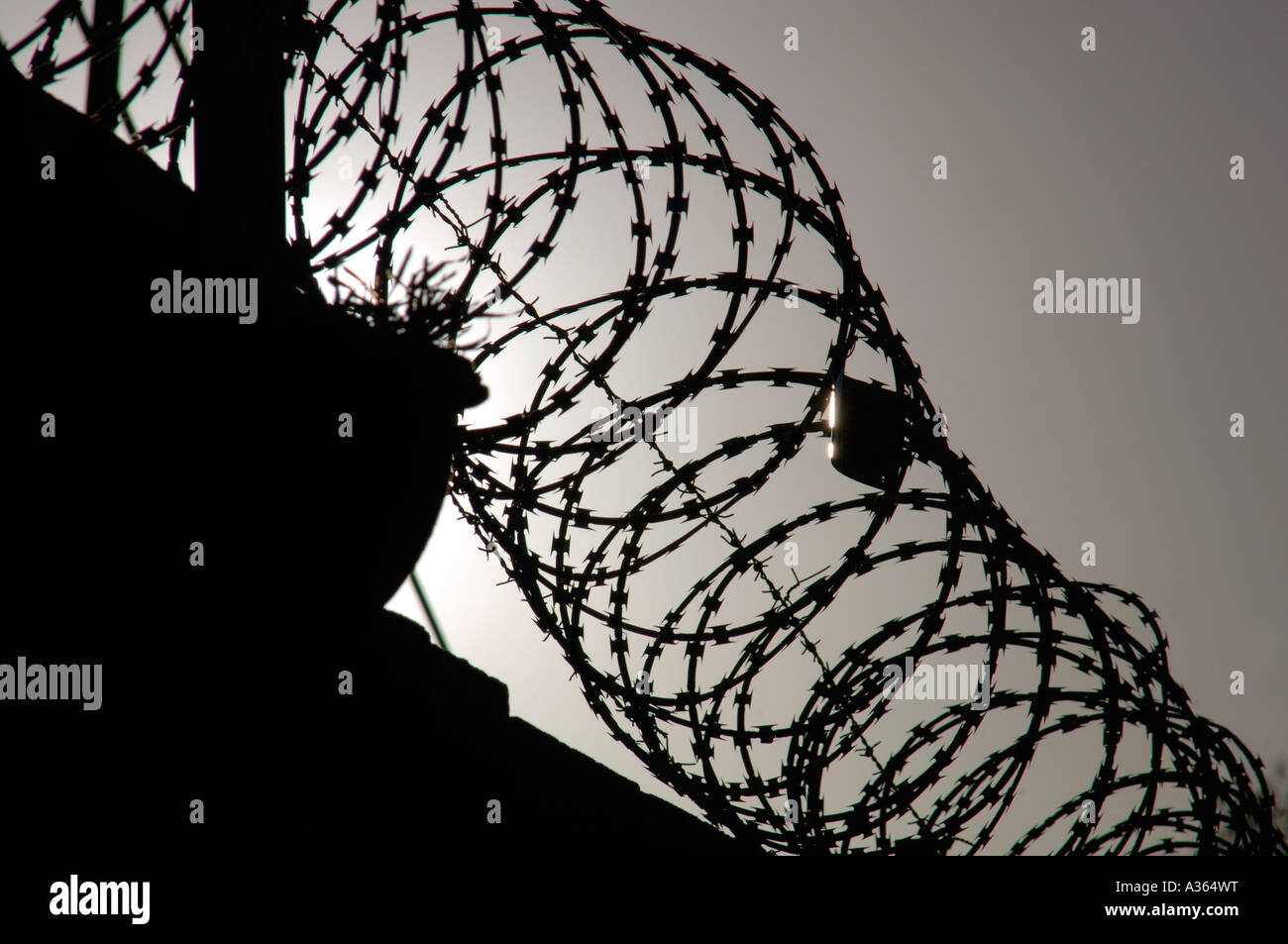 Silhouetted Image Of Razor Barbed Wire,Used As A Security Deterrent. - Stock Image