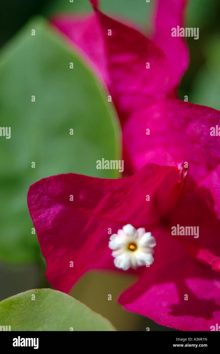 flower damn - Stock Image