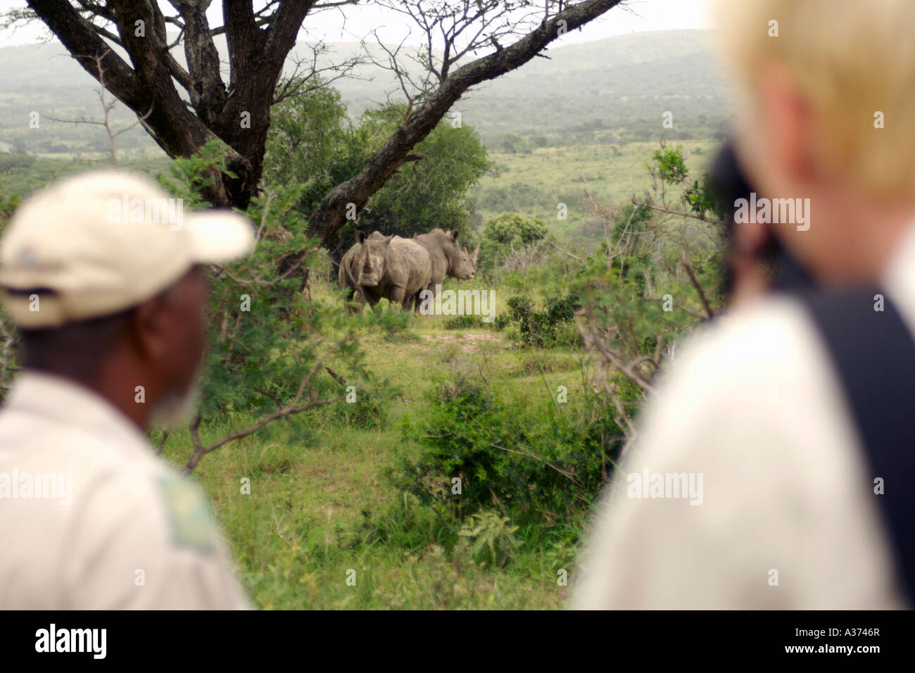Game ranger Elliot Qwabe with tourists on a guided game walk in Umfolozi-Hluhluwe National Park in South Africa. - Stock Image